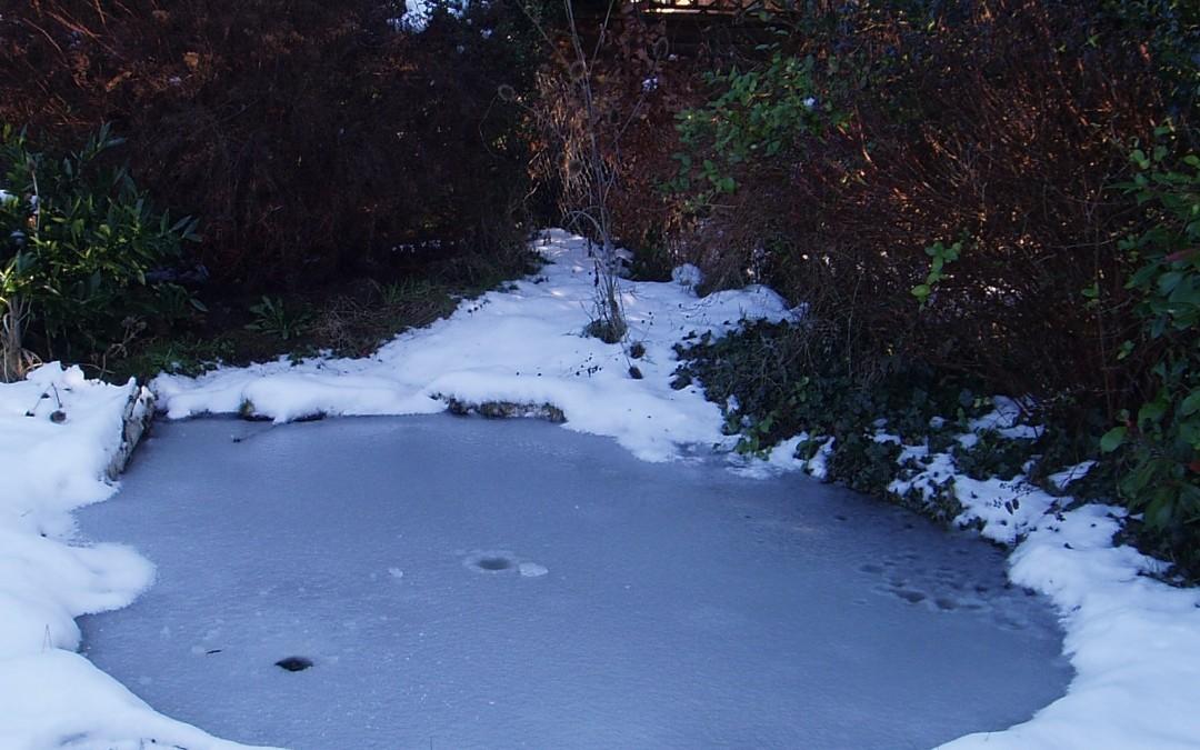 Bevroren vijver, ijsvrije vijver
